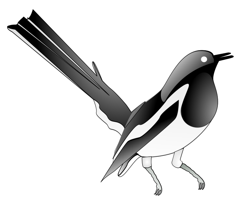 Oriental Magpie Robin by salahuddin66 - An Oriental Magpie Robin. If you need a simple shape, just remove the top glossy layer.