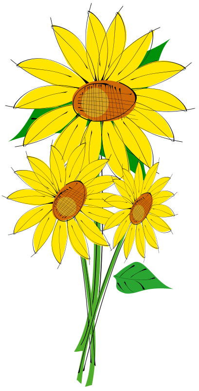 Helianthus by dadoprom -