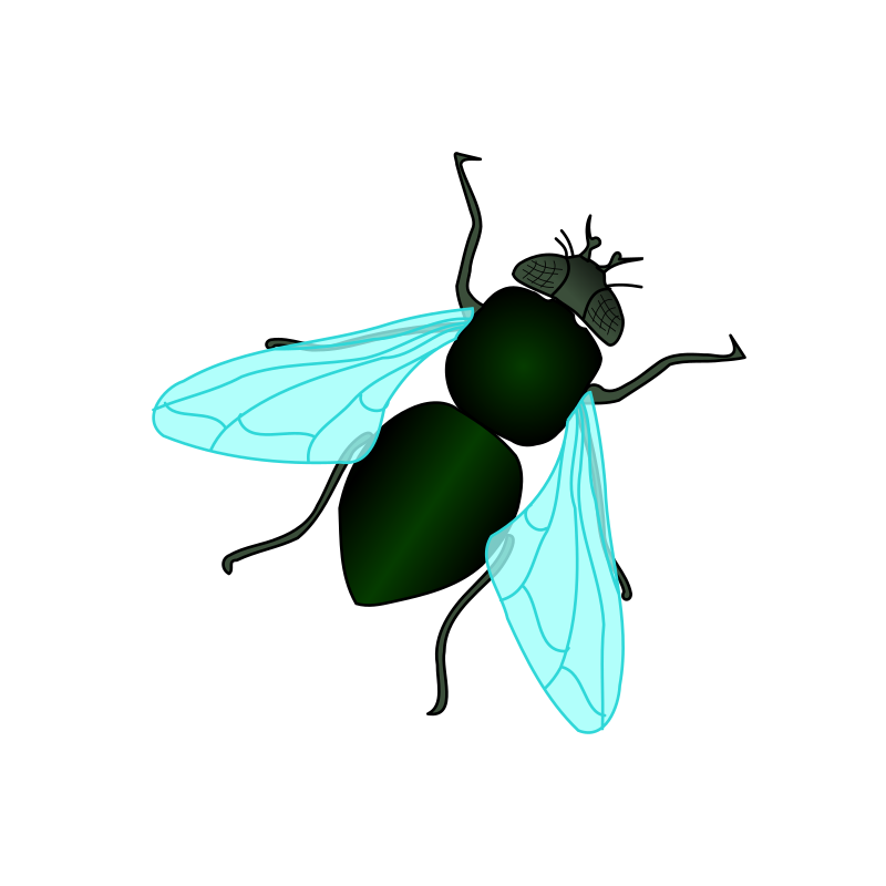 Green House Fly by bnielsen - A green house fly