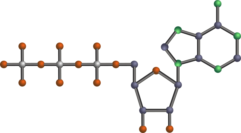 ATP by J_Alves - Adenosine 5'-triphosphate, one of the nucleotides (basic units) that make up RNA (ribonucleic acid), and also a molecule commonly used for energy storage by the cell. Done in Inkscape. Oxygen is red, nitrogen is green, phosphorus is silver, the rest is carbon. No hydrogens.