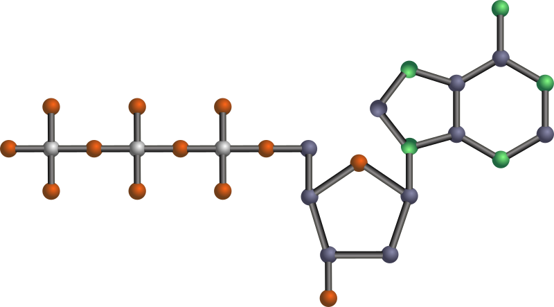 dATP by J_Alves - 2'-deoxyadenosine 5'-triphosphate, or dATP, one of the nucleotides (basic units) that make up DNA (deoxyribonucleic acid), the genetic material of all cellular organisms. Done in Inkscape. Oxygen is red, nitrogen is green, phosphorus is silver, the rest is carbon. No hydrogens.