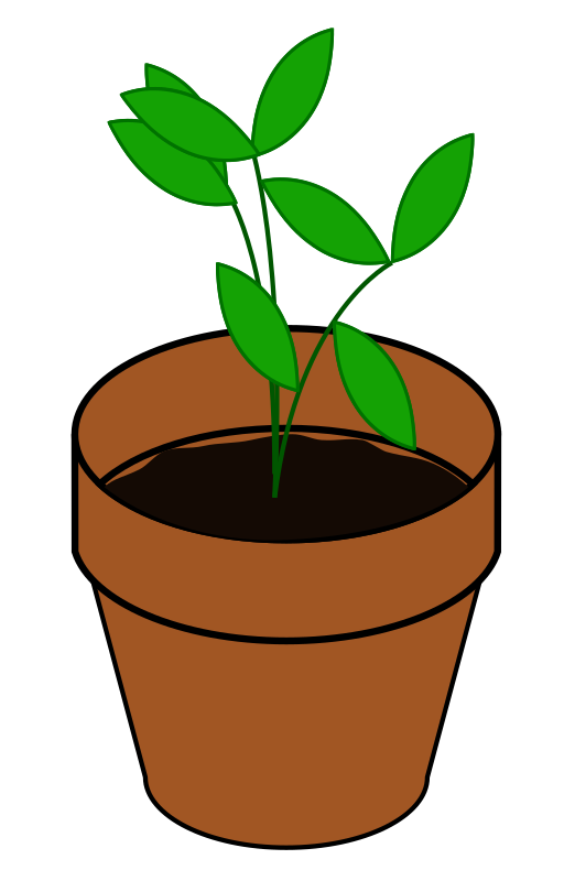 Plant, Terracotta by bnielsen - A simple plant in a terracotta pot.