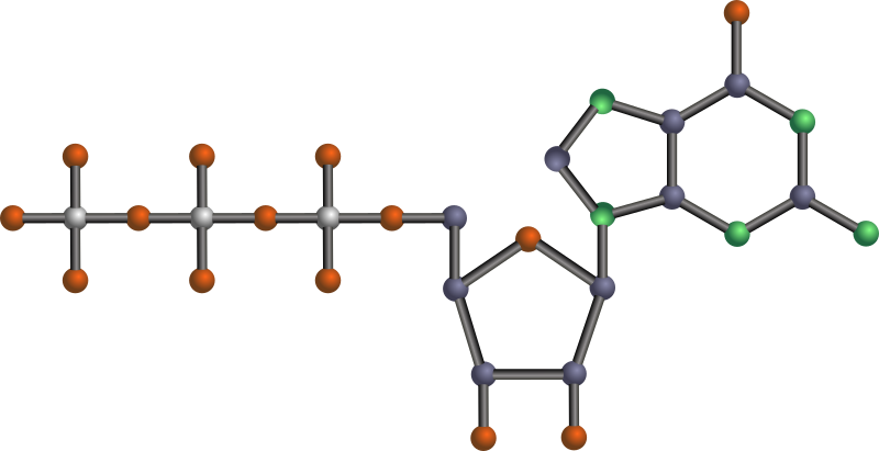GTP by J_Alves - Guanosine 5'-triphosphate, one of the nucleotides (basic units) that make up RNA (ribonucleic acid). Done in Inkscape.  Oxygen is red, nitrogen is green, phosphorus is silver, the rest is carbon. No hydrogens.