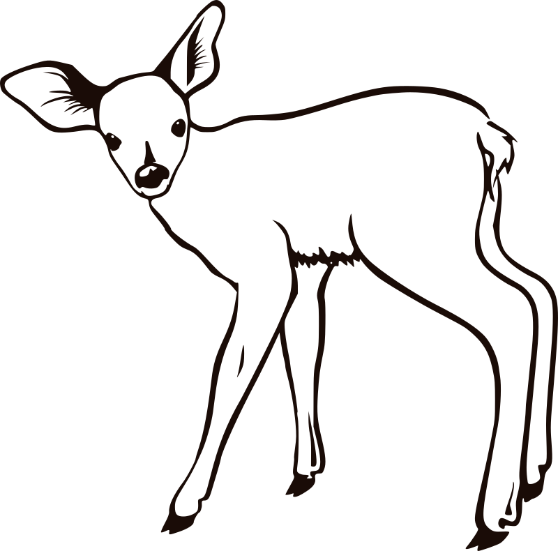fawn outline by molumen - A young deer outline.
