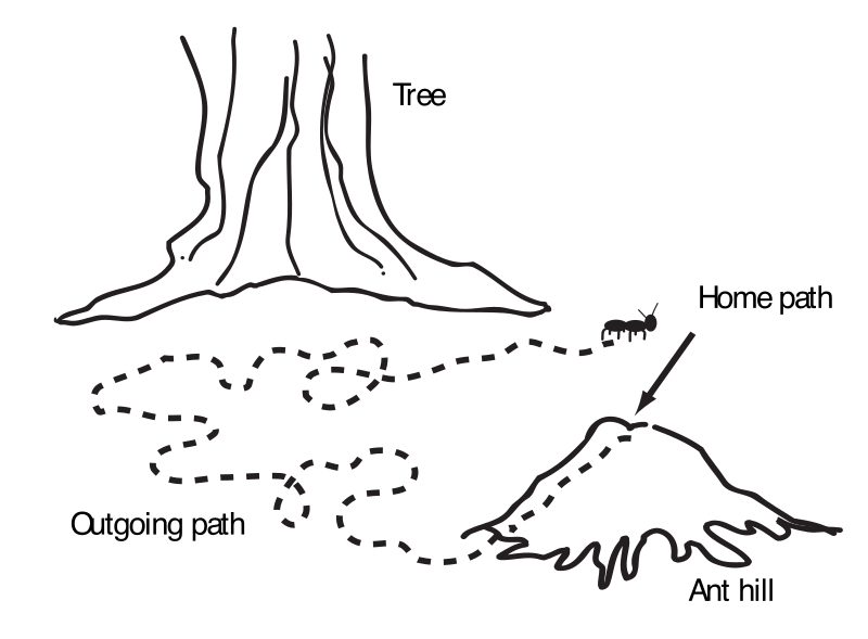 "Ant navigation map by rejon - This is clipart converted and broken apart that has been released into the public domain because the document says so, and its from NASA, a USA government agency. The publication is called ""The Brain in Space:""
