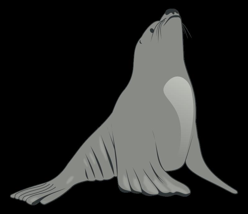Clipart sea lion