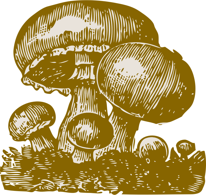 mushrooms by johnny_automatic - a drawing of a mushrooms
