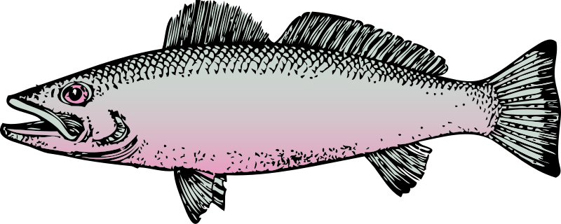 fish by johnny_automatic - side view of a fish
