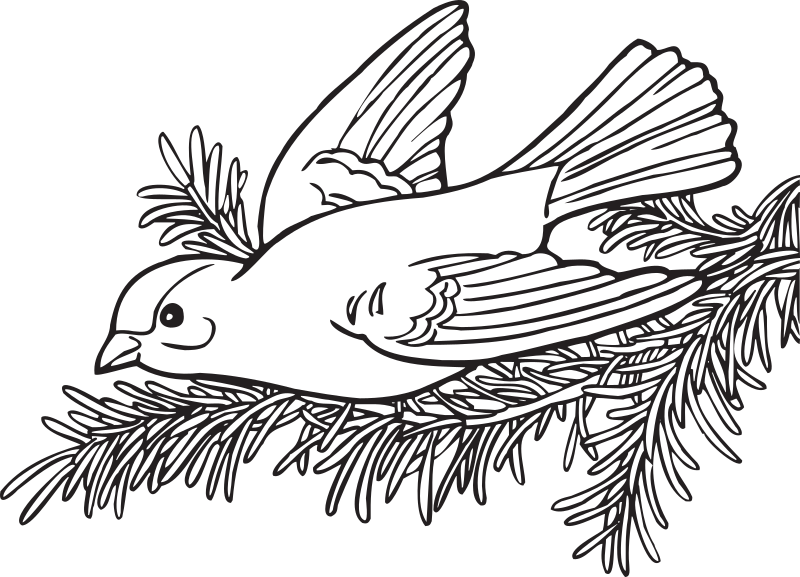 "Coloring Book Willow Goldfinch by FunDraw_dot_com - Extracted from ""The Washington State Coloring Book"", created by the WA state legislature with taxpayer funds. The coloring book carries no copyright notice, but has the statem"