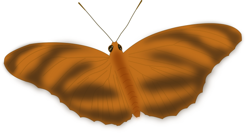 An Ethereal Butterfly by J_Alves - A dreamy, ethereal butterfly. Drawn in Inkscape, based on a photo of mine.