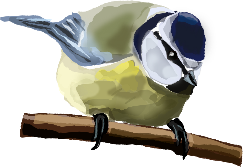 Blue Tit  by Degri - A Blue Tit on a branch.