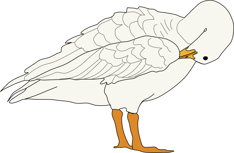oca acicalandose by system25 - This is a goose drawing.