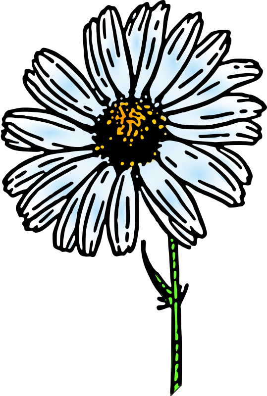 colored daisy 1 by pitr