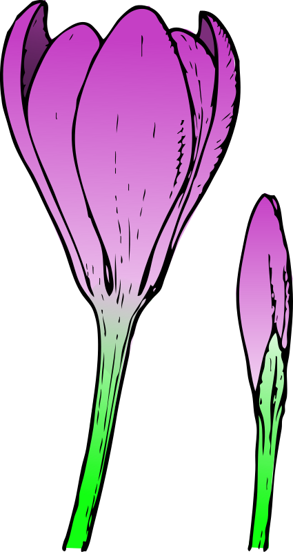 colored crocus 1 by pitr
