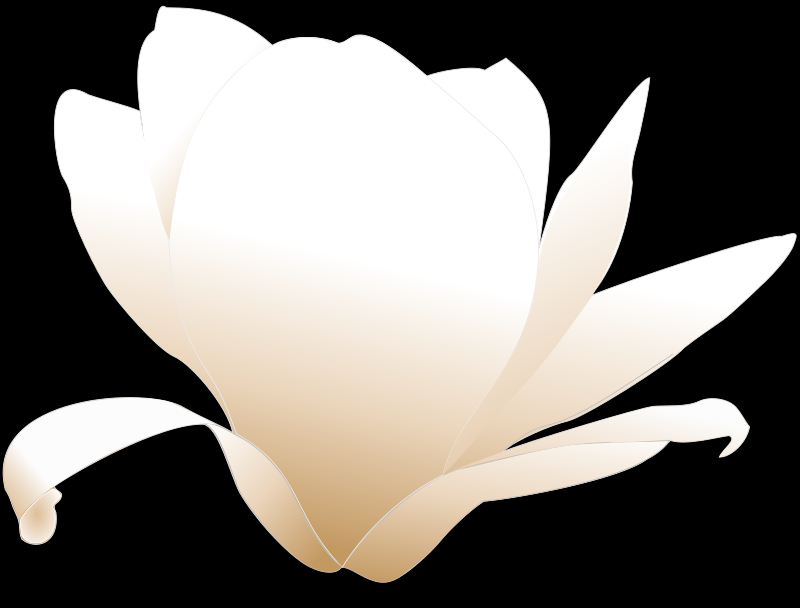 magnolia white patricia 03r by Anonymous
