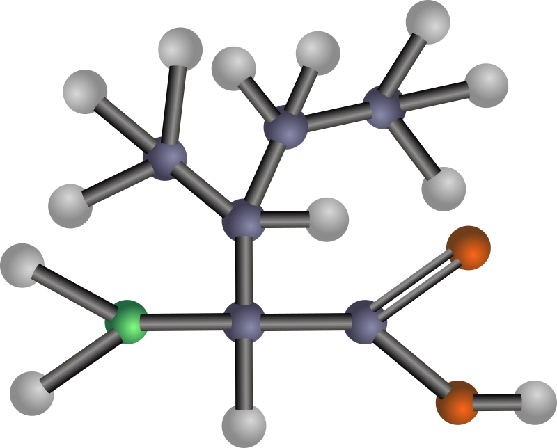 Isoleucine (amino acid) by J_Alves - A ball-and-stick model structure of non-polar, hydrophobic amino acid isoleucine (Ile, I). Carbon in blue-grey, oxygen in red, nitrogen in green, hydrogen in silver. Drawn in Inkscape.