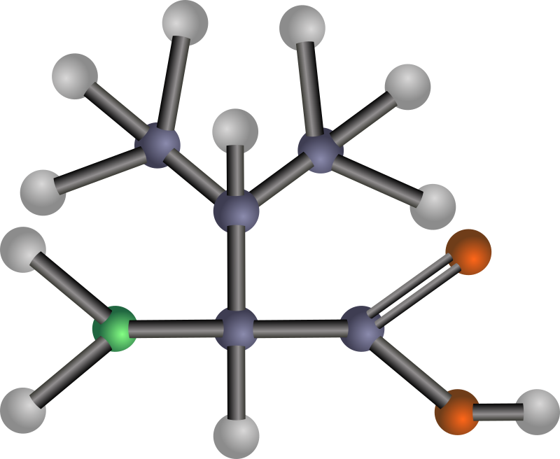 Valine (amino acid) by J_Alves - A ball-and-stick model structure of non-polar, hydrophobic amino acid valine (Val, V). Carbon in blue-grey, oxygen in red, nitrogen in green, hydrogen in silver. Drawn in Inkscape.