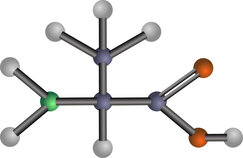 Alanine (amino acid) by J_Alves - A ball-and-stick model structure of non-polar, hydrophobic amino acid alanine (Ala, A). Carbon in blue-grey, oxygen in red, nitrogen in green, hydrogen in silver. Drawn in Inkscape.