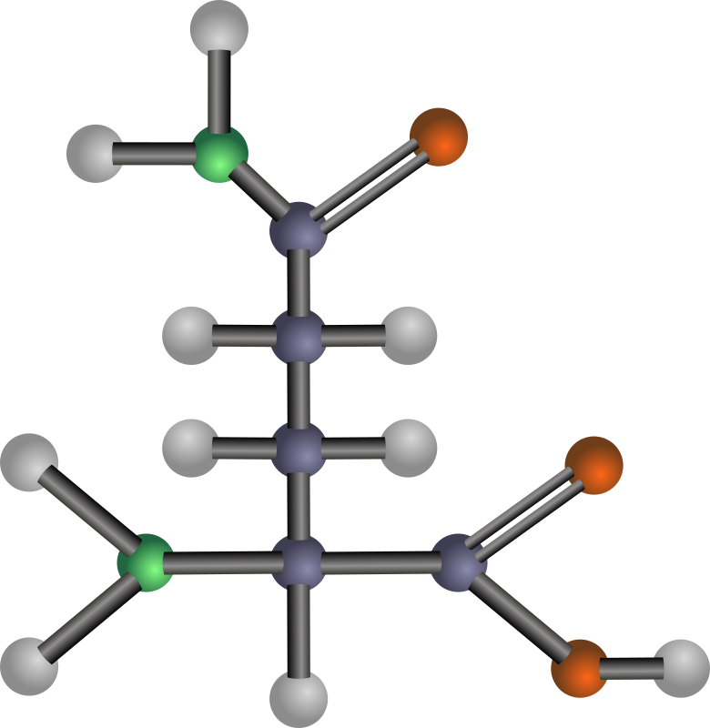 Glutamine (amino acid) by J_Alves - A ball-and-stick model structure of polar amino acid glutamine (Gln, Q). Carbon in blue-grey, oxygen in red, nitrogen in green, hydrogen in silver. Drawn in Inkscape.