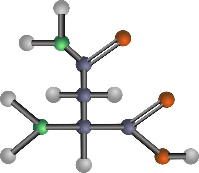 Asparagine (amino acid) by J_Alves - A ball-and-stick model structure of polar amino acid asparagine (Asn, N). Carbon in blue-grey, oxygen in red, nitrogen in green, hydrogen in silver. Drawn in Inkscape.