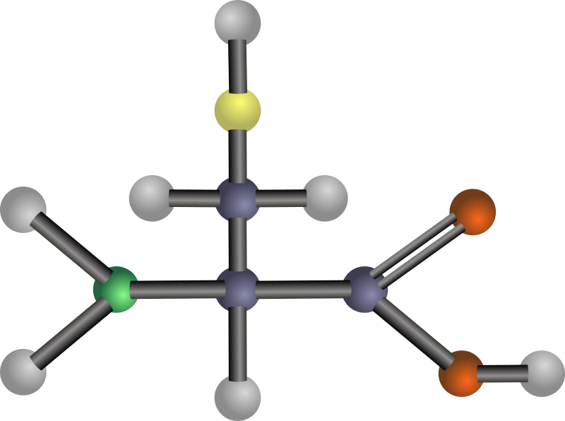 Cysteine (amino acid) by J_Alves - A ball-and-stick model structure of polar amino acid cysteine (Cys, C). Carbon in blue-grey, oxygen in red, nitrogen in green, hydrogen in silver, sulfur in yellow. Drawn in Inkscape.