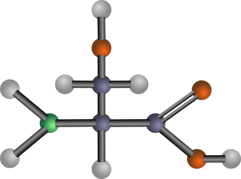 Serine (amino acid) by J_Alves - A ball-and-stick model structure of polar amino acid serine (Ser, S). Carbon in blue-grey, oxygen in red, nitrogen in green, hydrogen in silver. Drawn in Inkscape.