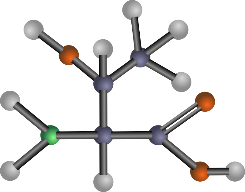 Threonine (amino acid) by J_Alves - A ball-and-stick model structure of polar amino acid threonine (Thr, T). Carbon in blue-grey, oxygen in red, nitrogen in green, hydrogen in silver. Drawn in Inkscape.