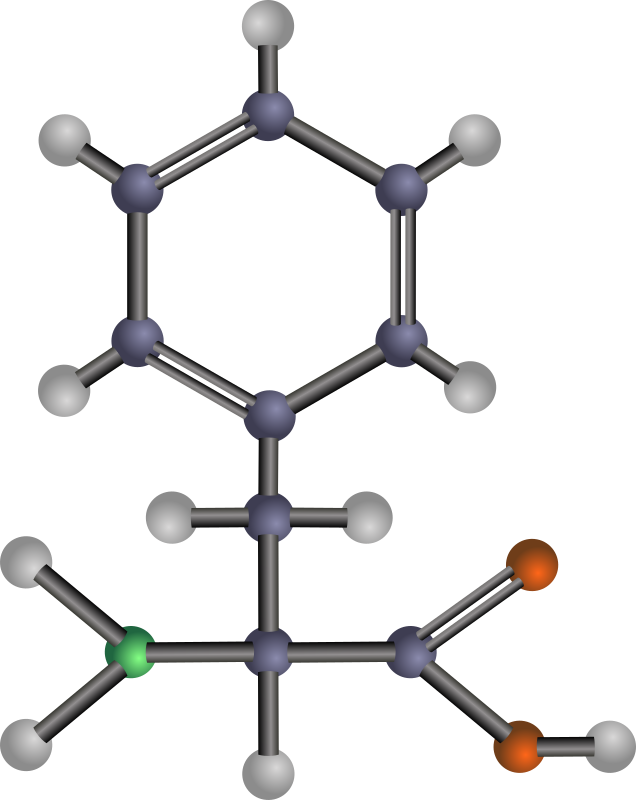 Phenylalanine (amino acid) by J_Alves - A ball-and-stick model structure of non-polar, hydrophobic amino acid phenylalanine (Phe, F). Carbon in blue-grey, oxygen in red, nitrogen in green, hydrogen in silver. Drawn in Inkscape.