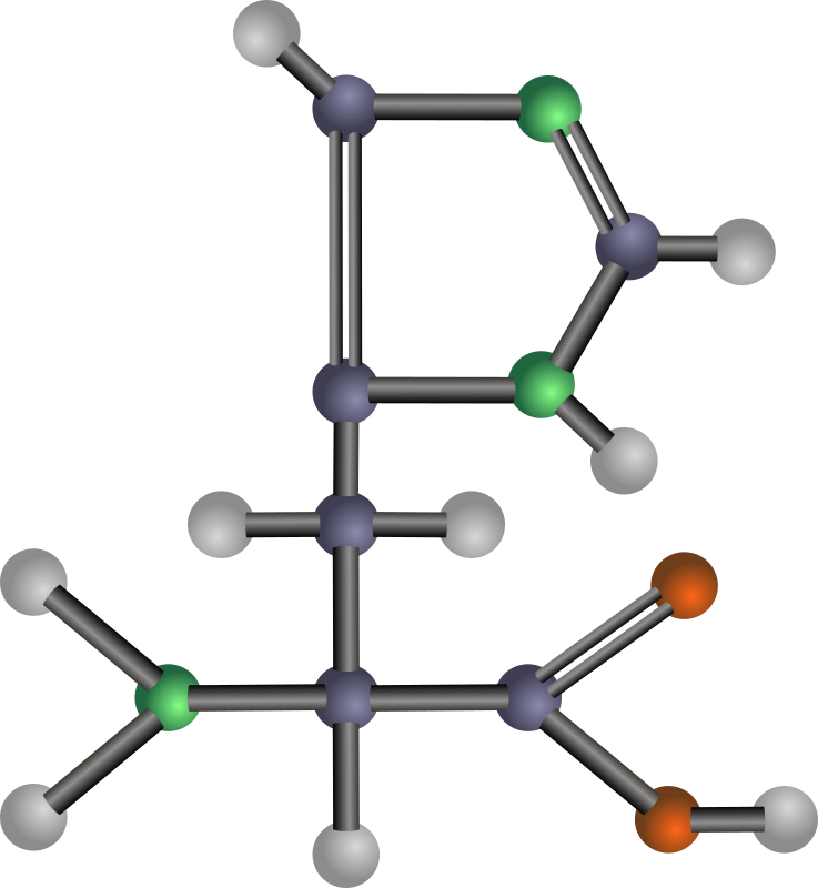 Histidine (amino acid) by J_Alves - A ball-and-stick model structure of basic (positively-charged) amino acid histidine (His, H). Carbon in blue-grey, oxygen in red, nitrogen in green, hydrogen in silver. Drawn in Inkscape.