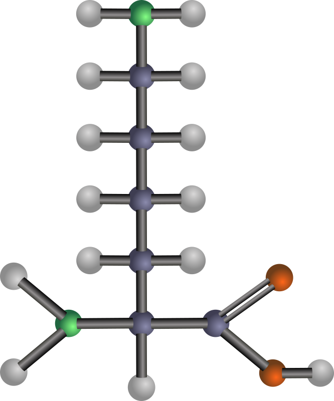 Lysine (amino acid) by J_Alves - A ball-and-stick model structure of basic (positively-charged) amino acid lysine (Lys, K). Carbon in blue-grey, oxygen in red, nitrogen in green, hydrogen in silver. Drawn in Inkscape.