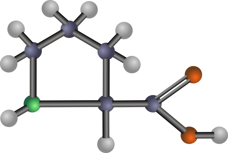 Proline (amino acid) by J_Alves - A ball-and-stick model structure of non-polar amino acid proline (Pro, P). Carbon in blue-grey, oxygen in red, nitrogen in green, hydrogen in silver. Drawn in Inkscape.