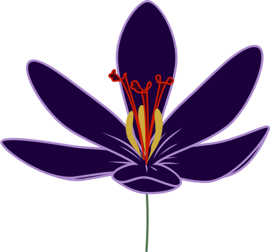 Crocus Blossom by skotan - A flower of saffron crocus.