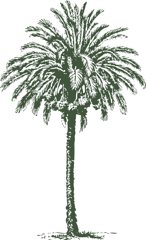 date palm by johnny_automatic - The illustrated dictionary of gardening, a practical and scientific encyclopedia of horticulture for gardeners and botanists ([1884]-89)
