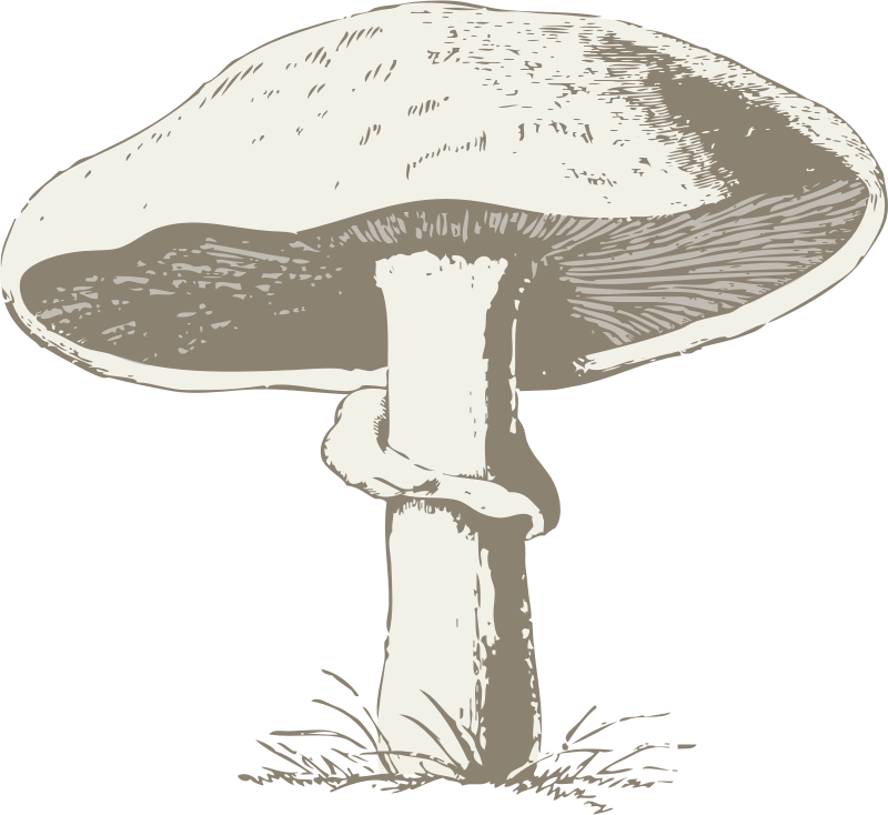 mushroom by johnny_automatic - The illustrated dictionary of gardening, a practical and scientific encyclopedia of horticulture for gardeners and botanists ([1884]-89)