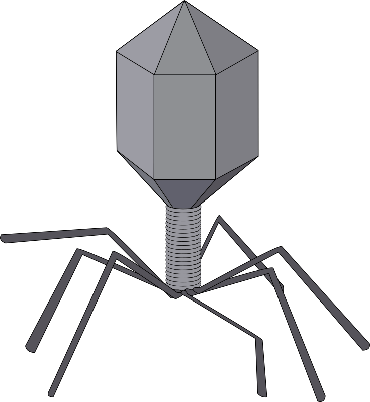 "Virus by J_Alves - A ""cartoon-ish"" virus, bacteriophage-style. Drawn in Inkscape."