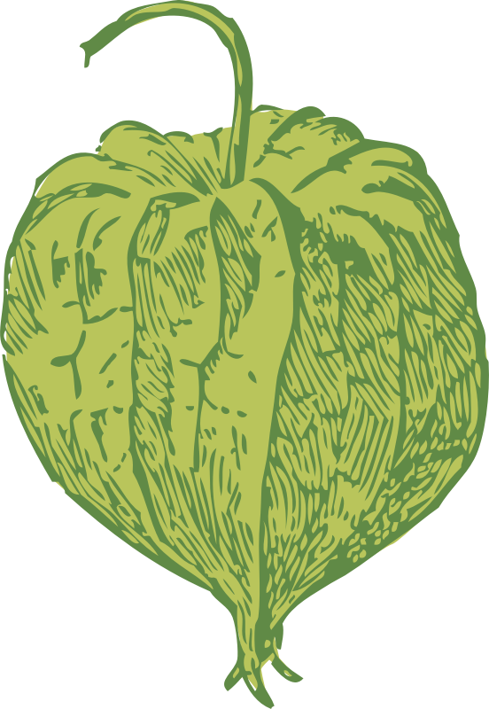 tomatillo by johnny_automatic - The Book of Vegetables, 1907