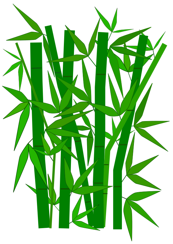 Bamboo graphic by aungkarns - Bamboo, Plants, Trees, Green