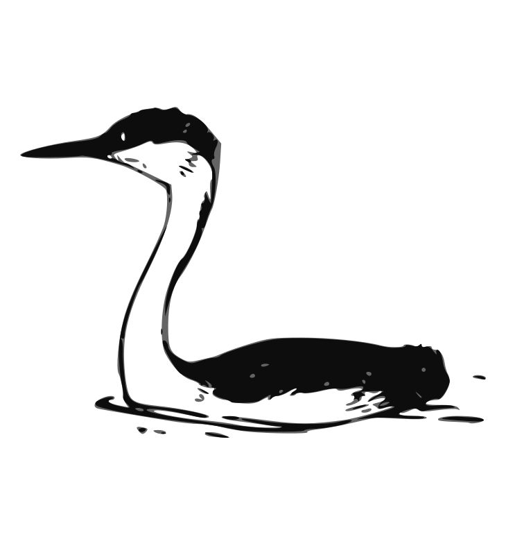 Western Grebe 2 by ryanlerch - A line art drawing of a western grebe by Bob Hines for the US Fish and Wildlife Service. Source URL:http://www.fws.gov/pictures/lineart/bobhines/westerngrebes.html