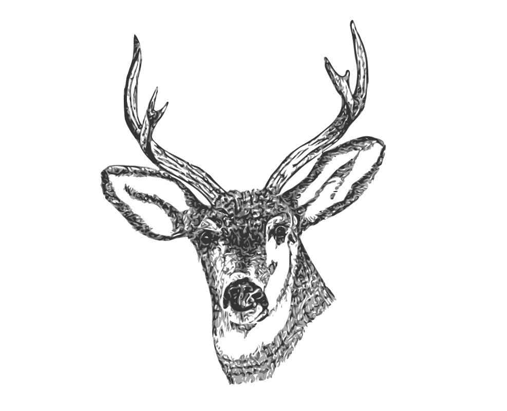 Deer Head by ryanlerch - A line art drawing of a Deers head by Tom Kelley for the US Fish and Wildlife Service. Source URL:http://www.fws.gov/pictures/lineart/tomkelley/deerhead.html