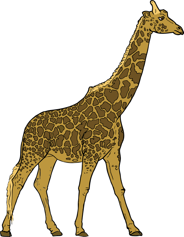 Giraffe by SteveLambert - Color drawing of a giraffe in profile.  Colored by Packard Jennings