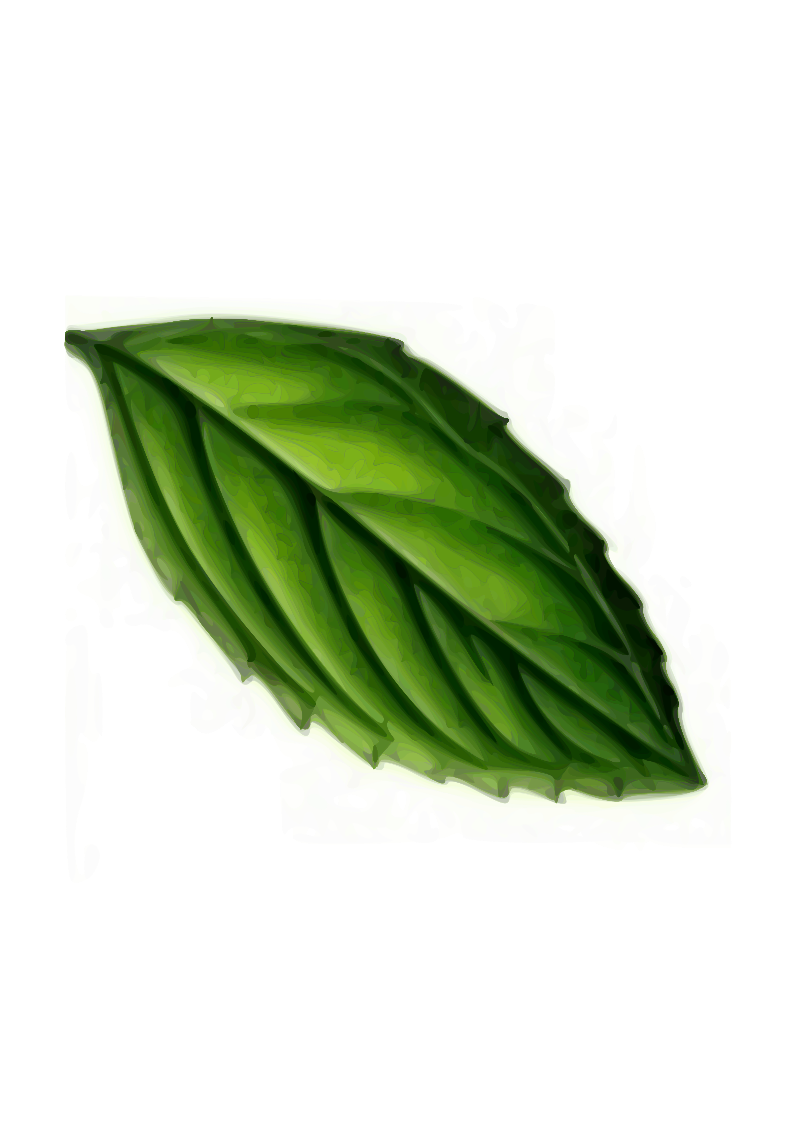 Mint Leaf by sandcat01 - A mint leaf traced with Inkscape from http://upload.wikimedia.org/wikipedia/commons/5/55/Koeh-095.jpg (by Koehler). The image is very large! -- Nicholas Paun