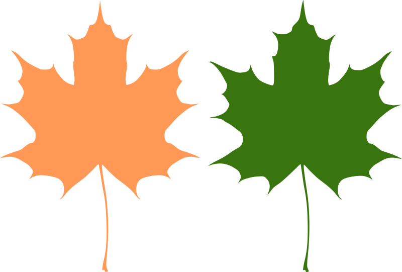 Maple leaves by rones - Two maple leaves (symmetrical and asymmetrical)