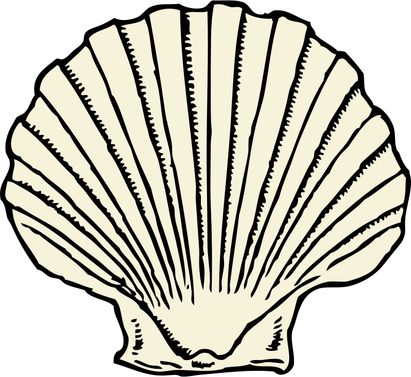 scallop shell by johnny_automatic