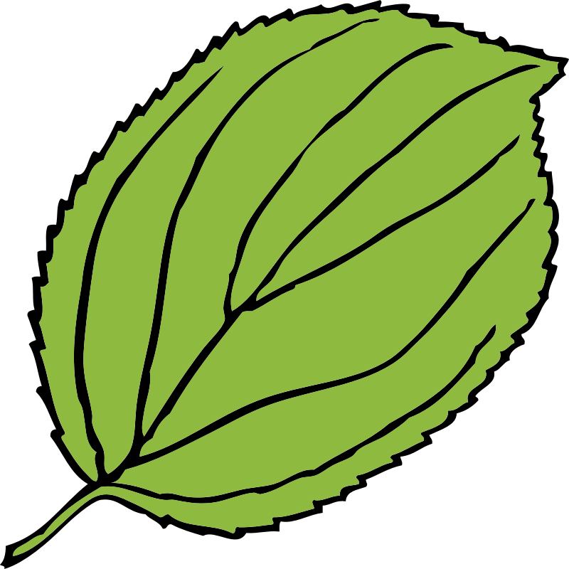 serrate leaf by johnny_automatic