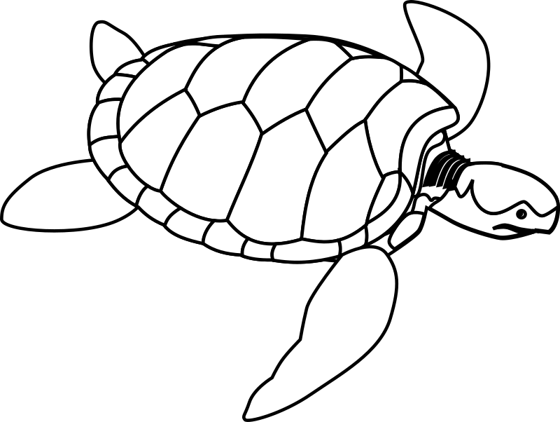 Green sea turtle line art by horse50