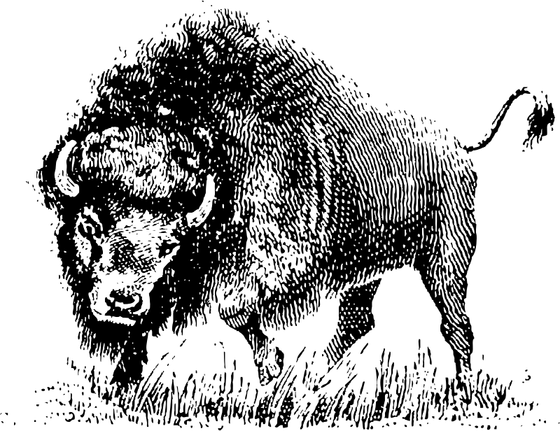 buffalo by johnny_automatic - Buffalo in black and white