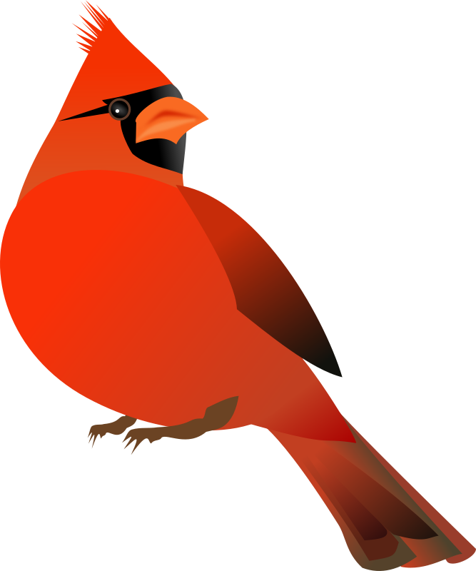Red Cardinal by kattekrab - A perky red male cardinal - inspired by @emmajanedotnet