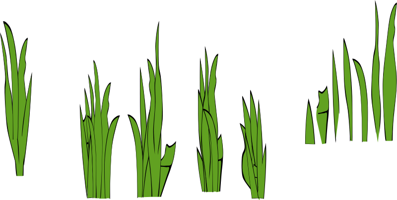 Grass Blades and Clumps by eady