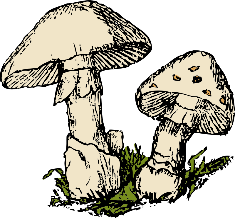 two mushrooms by johnny_automatic - a colored drawing of two mushrooms
