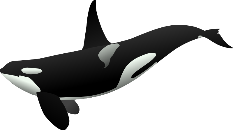 orca matthew gates r by Anonymous - Originally uploaded for OCAL 0.18 by Matthew Gates